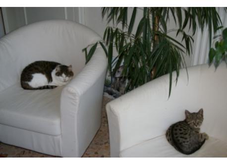 Nous avons deux chats qui ne demandent qu'à être calinés.