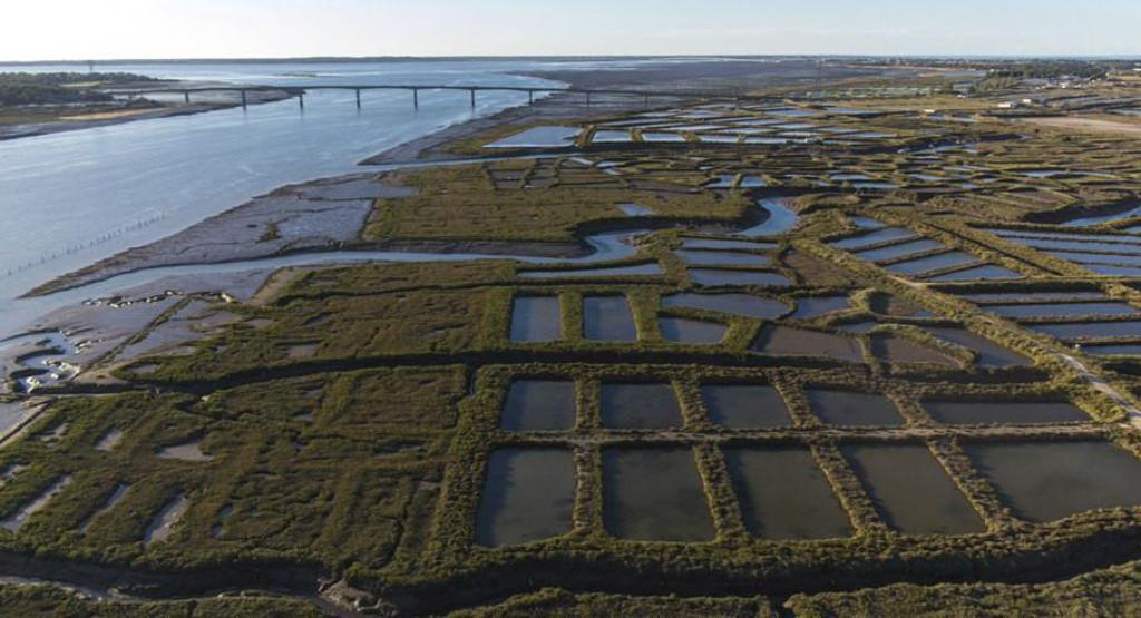 the oysters beds in Marennes (70km)