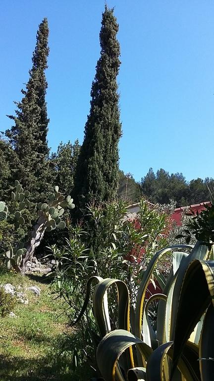 Cyprès et Agaves gardent le jardin !