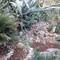 Rocaille et Agaves au jardin