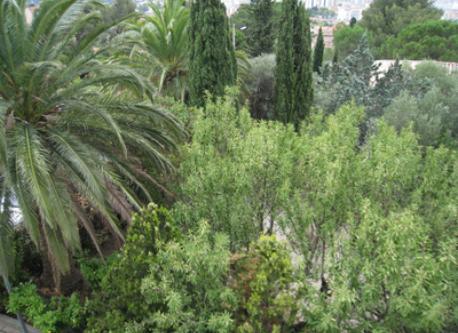 Cote d'Azur Flat, the flat garden