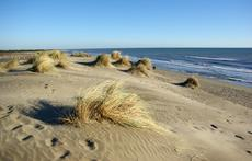 Espiguette beach