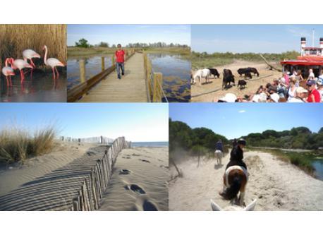 Pink Floyd, Mejean (natural parc), Bas Rhone cruise, Espiguette beach, Horse in Camargue