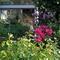 Le jardin à la fin du printemps