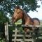 Des chevaux, auxquels on peut rendre visite.