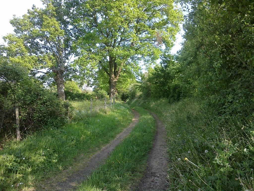 Des promenades accessibles de la maison, à pied...Un chemin creux.