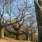 Des arbres remarquables à Sainte-Suzanne