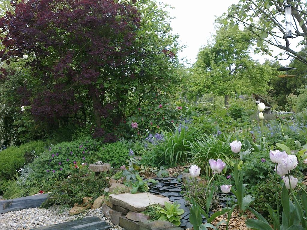 Vue du jardin depuis la véranda, fleurs du printemps