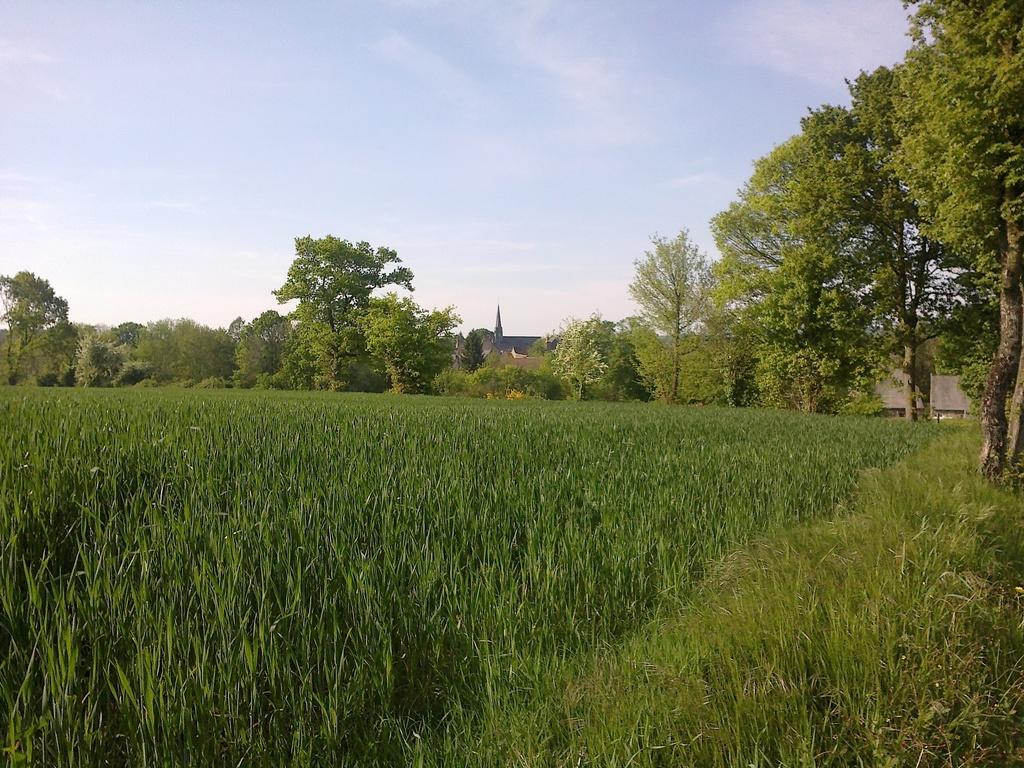 Le clocher du village, aperçu depuis le chemin.