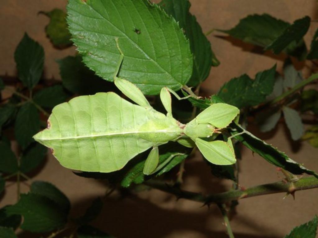 insectarium lizio