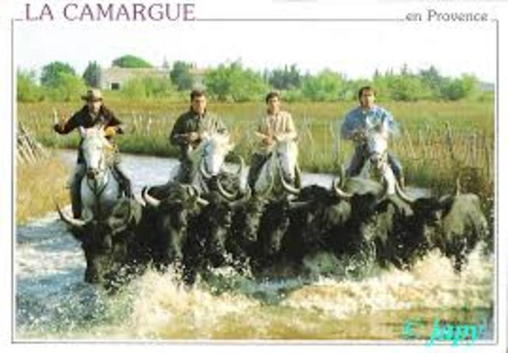 La Camargue, 40 mn by car