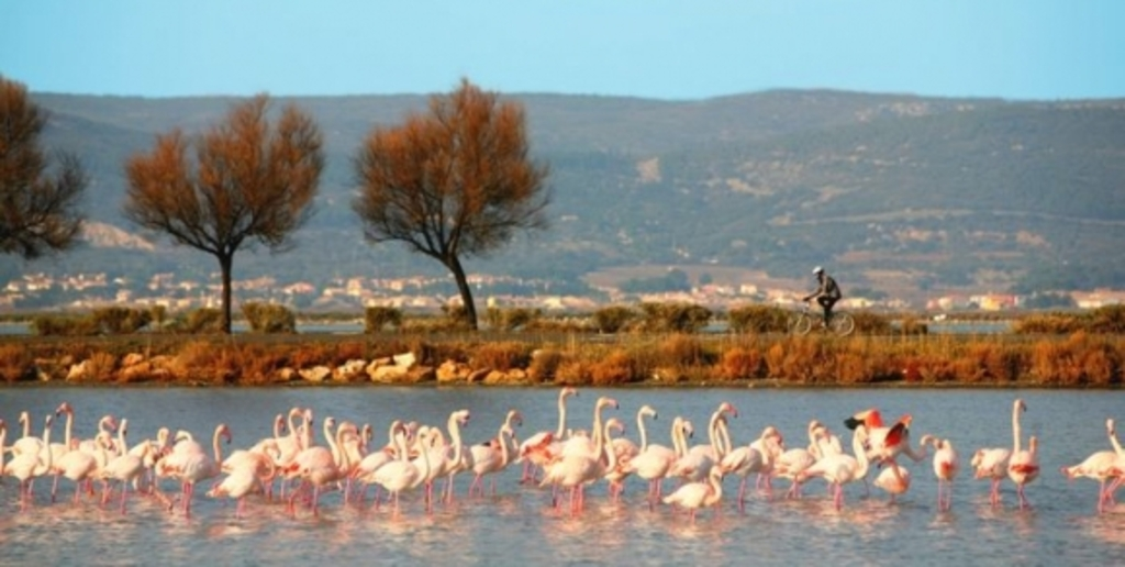you can ride bicycle along the sea or the ponds and see the flamingos or others birds, at Palavas, Carnon (you can take our b...