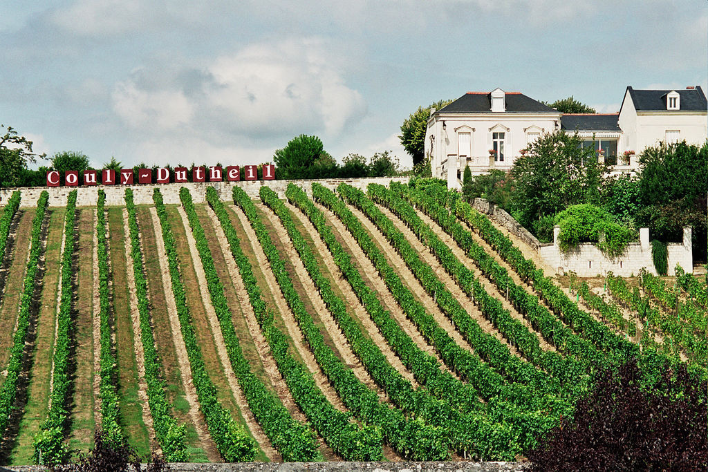 vignoble de Touraine / vineyard