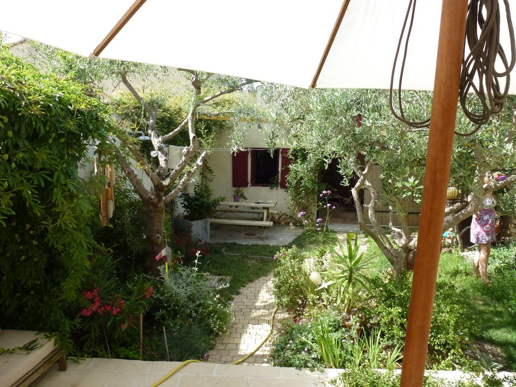 Le jardin : nos vieux oliviers !