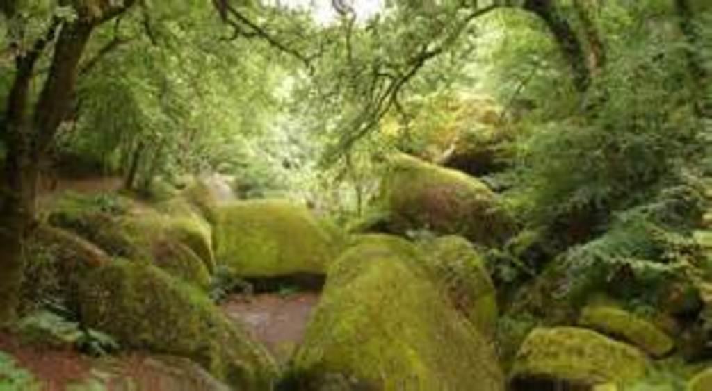 Forêt d'Huelgoat 20 minutes