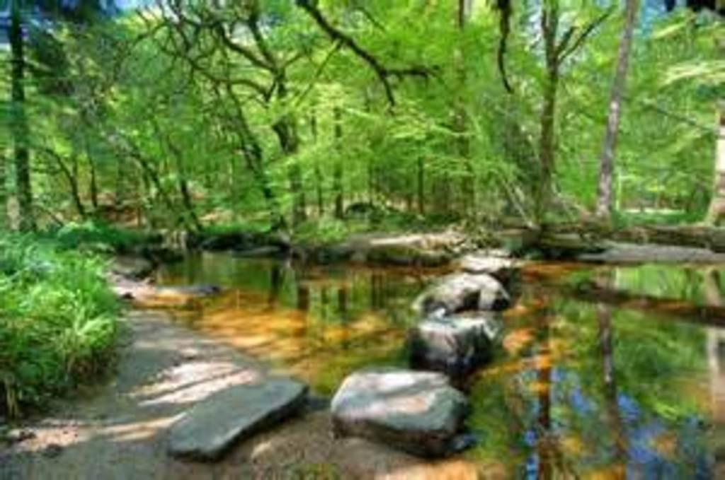 La Rivière d'Argent in the Forêt de Huelgoat