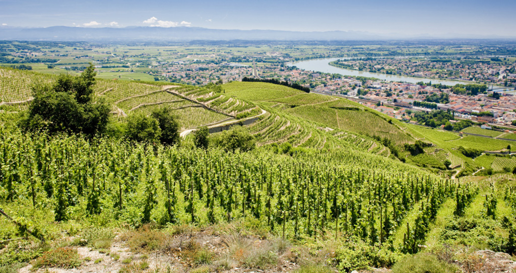 Rhône Valley vineyard