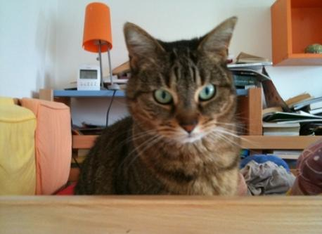 our cat, Lilis, which stays in the flat