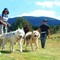 Saint-Regis du Coin : balade avec chien de traineau (55 km)