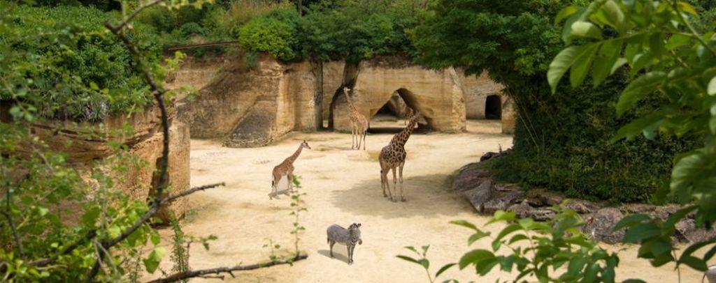 Doué-la-Fontaine gorgeous zoo