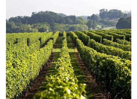 vineyards around Bordeaux