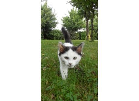 Our female kitten Brioche