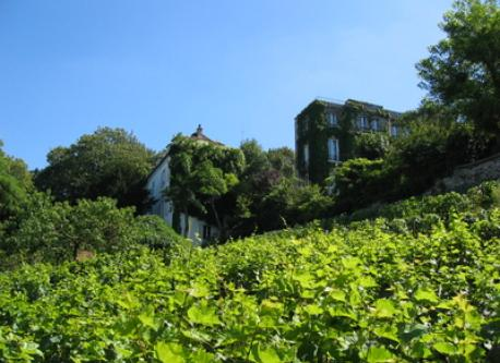 Vineyards, Montmartre, Paris