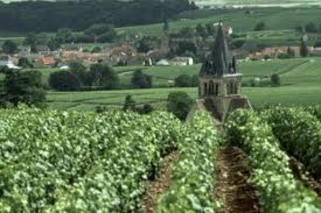 45 minutes from Chambry, discover the vineyards of Reims
