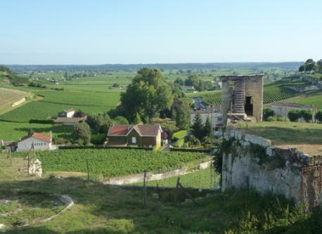 SAINT-EMILION VINEYARD