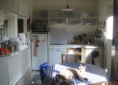 le chat dans la cuisine