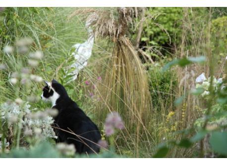 Fidelio in the garden