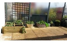 Terrasse - potager
