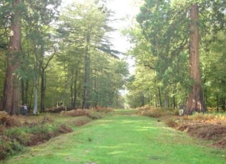 Brockenhurst, New Forest