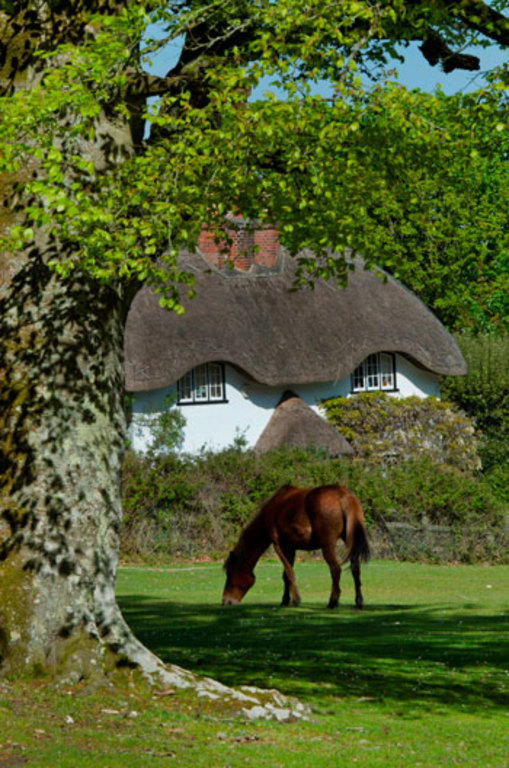 Thatched cottages and ponies in the New Forest. 20min drive