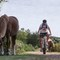 cycling with ponies in the New Forest