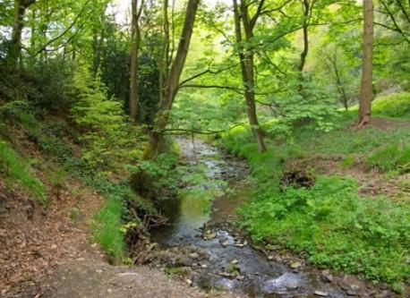 stream in wood