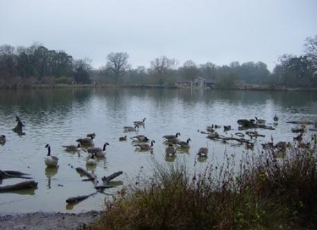 The lake at Hatfield Forest