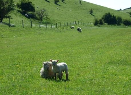 The South Downs - 20 minutes' walk from our house