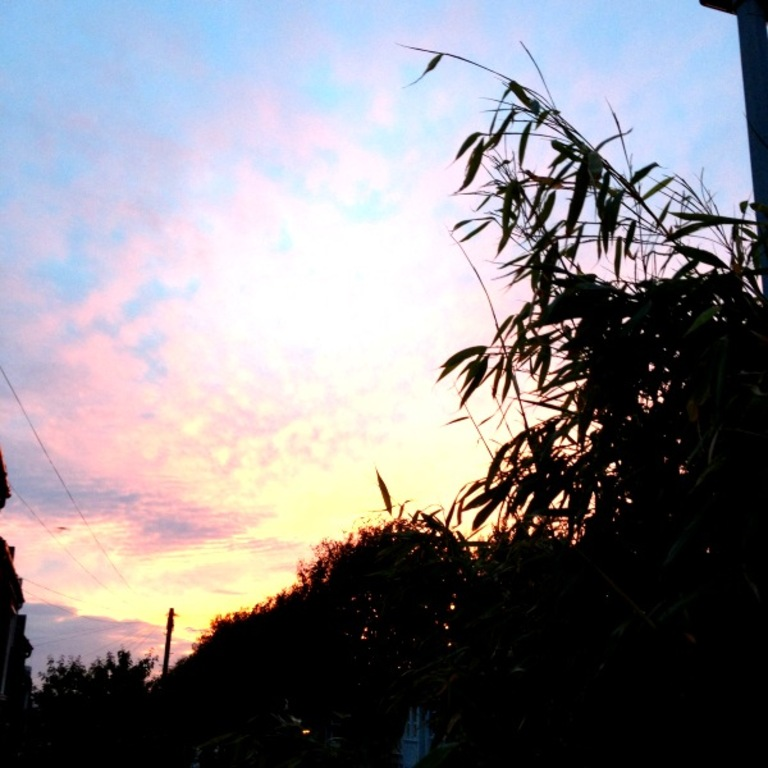 Sunset over the bamboo...