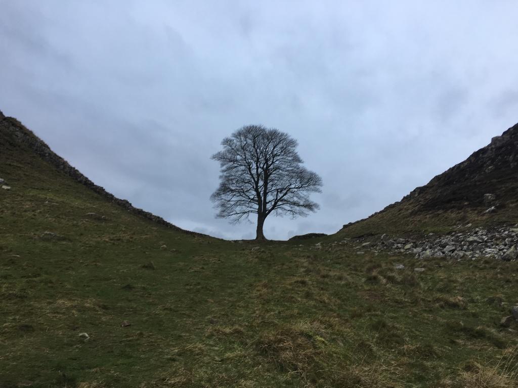 Sycamore Gap (Hadrians Wall)