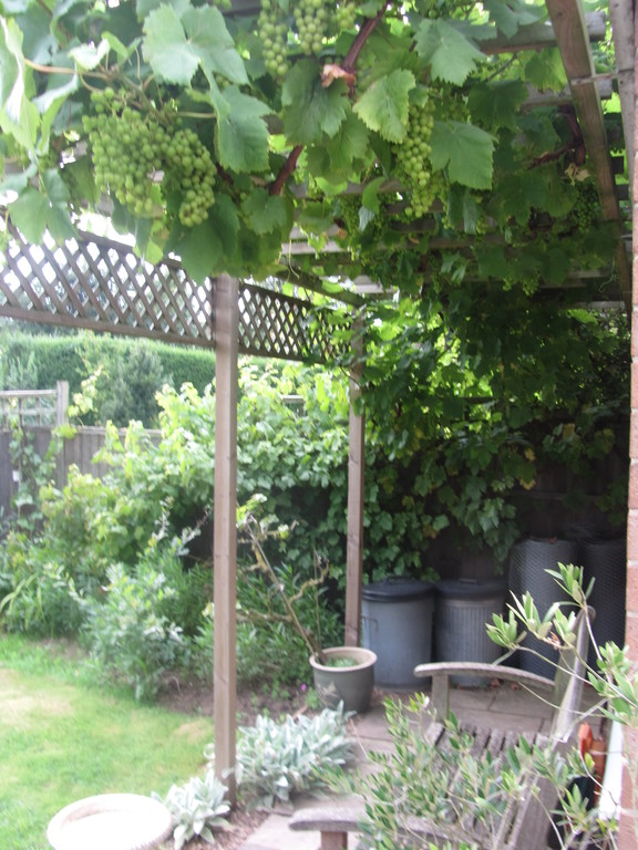 Vines in rear garden