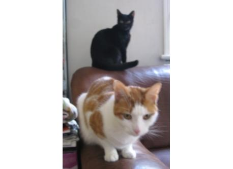 Our cats, Kika & Ed
