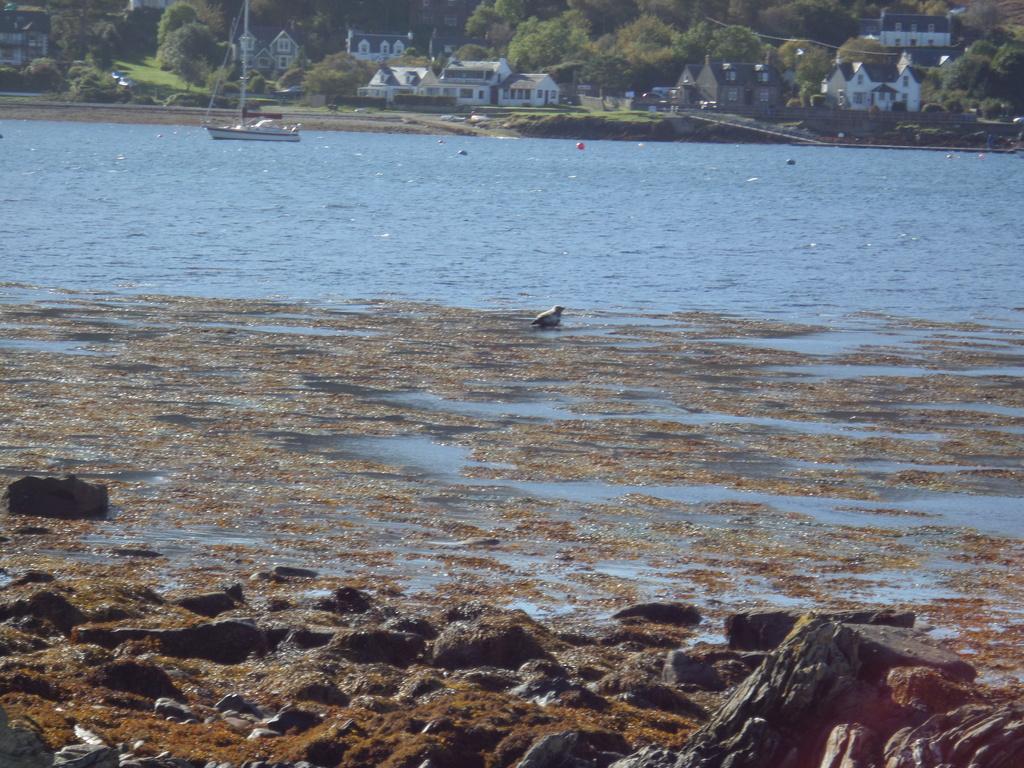 Seal in Lochranza Bay