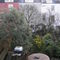 Bristol back garden