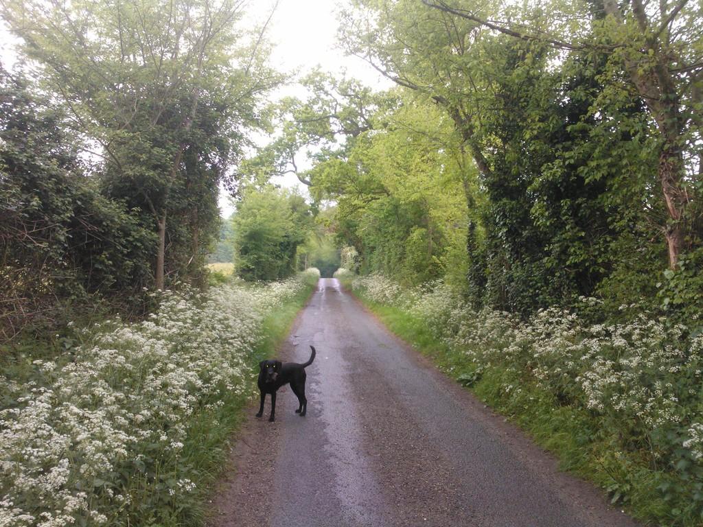Mill Lane Thurston May 2014
