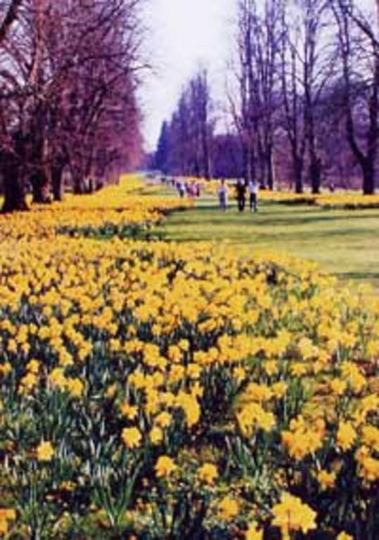 Nowton Park Bury St Edmunds in spring