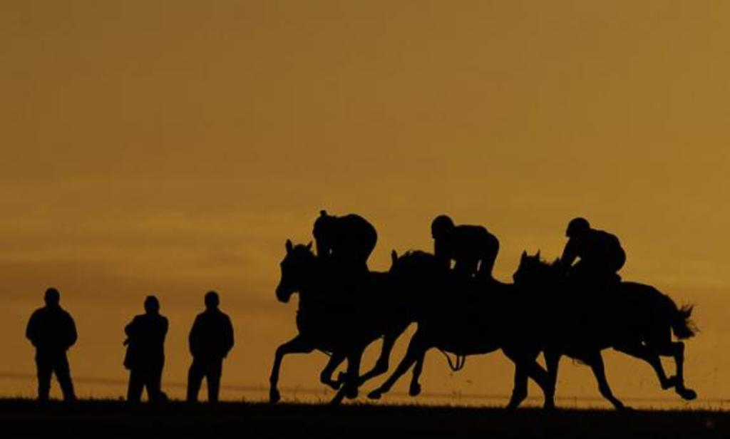 Early morning on Newmarket gallops. To be able to get close to hundreds of thoroughbred horses training on Newmarket gallops ...