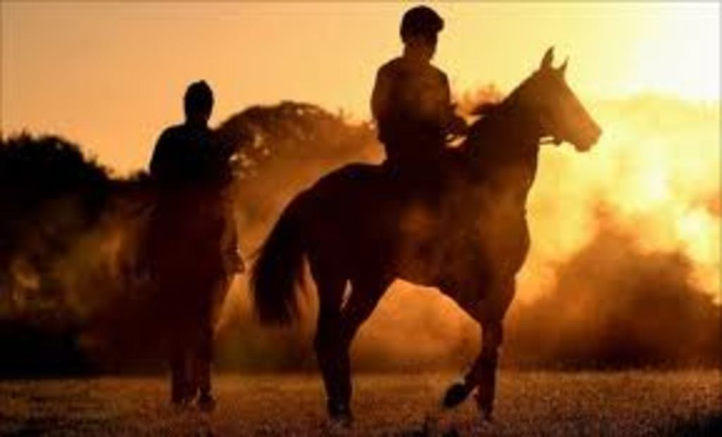 Early morning on Newmarket gallops