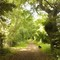 Sheep Lane, Thurston in summer - one of many walks around Thurston just a short distance  from our home