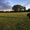 Rhubarb at Datchet Recreation Ground